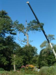 tree-792915